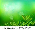 nature leaves green tea on... | Shutterstock .eps vector #776695309