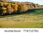 the flock of sheep or goats on... | Shutterstock . vector #776712781
