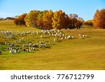 the flock of sheep or goats on... | Shutterstock . vector #776712799