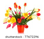 pink tulips on white background | Shutterstock . vector #77672296