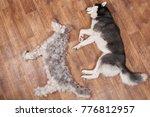 dog lies next to the figure dog ...   Shutterstock . vector #776812957