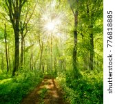 footpath through natural forest ... | Shutterstock . vector #776818885