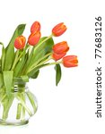 Orange tulips in glass vase - isolated on white - stock photo