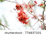 small red flower  | Shutterstock . vector #776837101