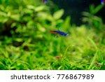 shrimp and fishes in aquarium... | Shutterstock . vector #776867989