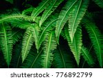close up tropical nature green... | Shutterstock . vector #776892799