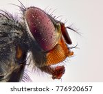 fly head macro | Shutterstock . vector #776920657