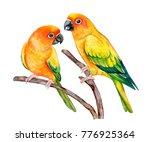 Sun Conure. Parrot Sun Parakeet ...
