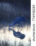 sandhill crane bosque del... | Shutterstock . vector #776938285