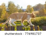 Stock photo rural cat on a fence 776981737