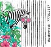 funny zebra in sunglasses in... | Shutterstock .eps vector #777011587