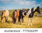 horses on a ranch in... | Shutterstock . vector #777026299