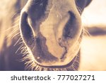 horses on a ranch in... | Shutterstock . vector #777027271