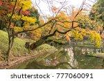 autumn leaves of higo hosokawa... | Shutterstock . vector #777060091