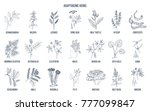 adaptogen herbs. hand drawn... | Shutterstock .eps vector #777099847