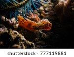 Donald Duck Shrimp