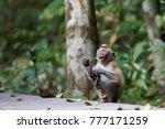 shocked baby monkey grabbing... | Shutterstock . vector #777171259