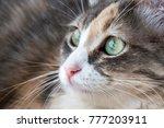 Stock photo the cute cat 777203911