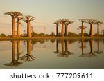 baobabs trees in madagascar ... | Shutterstock . vector #777209611