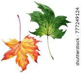 maple leaves in a watercolor... | Shutterstock . vector #777249124