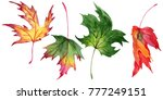 maple leaves in a watercolor... | Shutterstock . vector #777249151