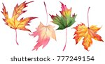 maple leaves in a watercolor... | Shutterstock . vector #777249154