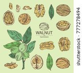 collection of walnut  nuts and... | Shutterstock .eps vector #777278494