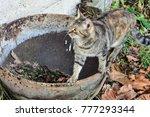 Cat On Old Pot