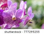 purple orchid flower | Shutterstock . vector #777295255