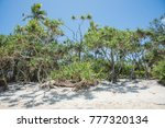 lush  tropical greenery growing ...   Shutterstock . vector #777320134