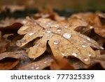 fallen autumn leaves with rain... | Shutterstock . vector #777325339