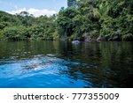 playful river dolphin  amazon... | Shutterstock . vector #777355009