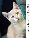 Stock photo funny cat portraits 777357439