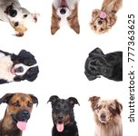 Stock photo group of dogs 777363625