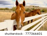 Two Brown Horses Look Over A...