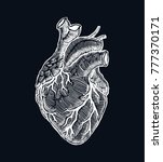 realistic human heart. vintage... | Shutterstock .eps vector #777370171