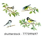 Watercolor Drawing Of Tit Birds ...