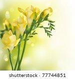 freesia flowers border design | Shutterstock . vector #77744851
