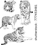 vector drawings sketches... | Shutterstock .eps vector #777453481