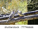 Two Mourning Doves Forming A...
