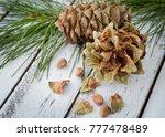 gummy resinous husked fir cones ... | Shutterstock . vector #777478489