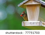 A Female Cardinal Perched At A...