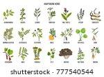 adaptogen herbs. hand drawn... | Shutterstock .eps vector #777540544
