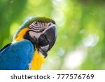 portrait colorful of blue macaw ... | Shutterstock . vector #777576769