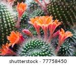 Beautiful Light Orange Flowers...