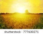 rice field sunlight nature... | Shutterstock . vector #777630271