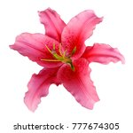 pink lily flower on a white... | Shutterstock . vector #777674305