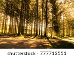 Bellever Forest With Direct...
