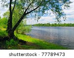 Tree Near The Water Of River I...