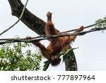 horizontal full length photo of ... | Shutterstock . vector #777897964